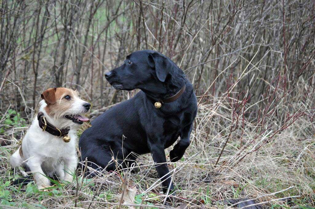 Bromfield Collection Dog Collar